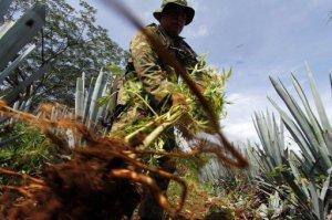 Centroamérica, territorio estratégico para las operaciones de tráfico de drogas desde el sur hacia Estados Unidos, se debate en el dilema de intensificar la lucha frontal contra los poderosos carteles, impulsada por Washington, o buscar otras alternativas para neutralizarlos. (AFP