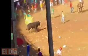 Toro fue apuñalado y linchado a patadas por espectadores